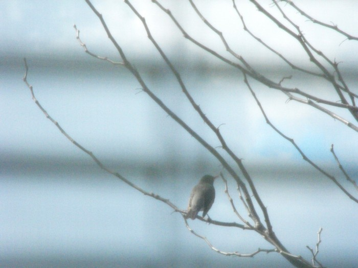 Photo of bird on branch in tree outside apartment