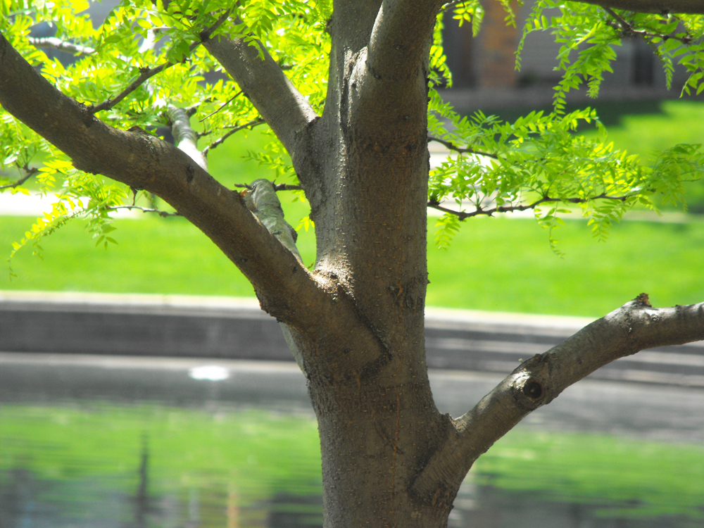 tree outside apartment May 2014
