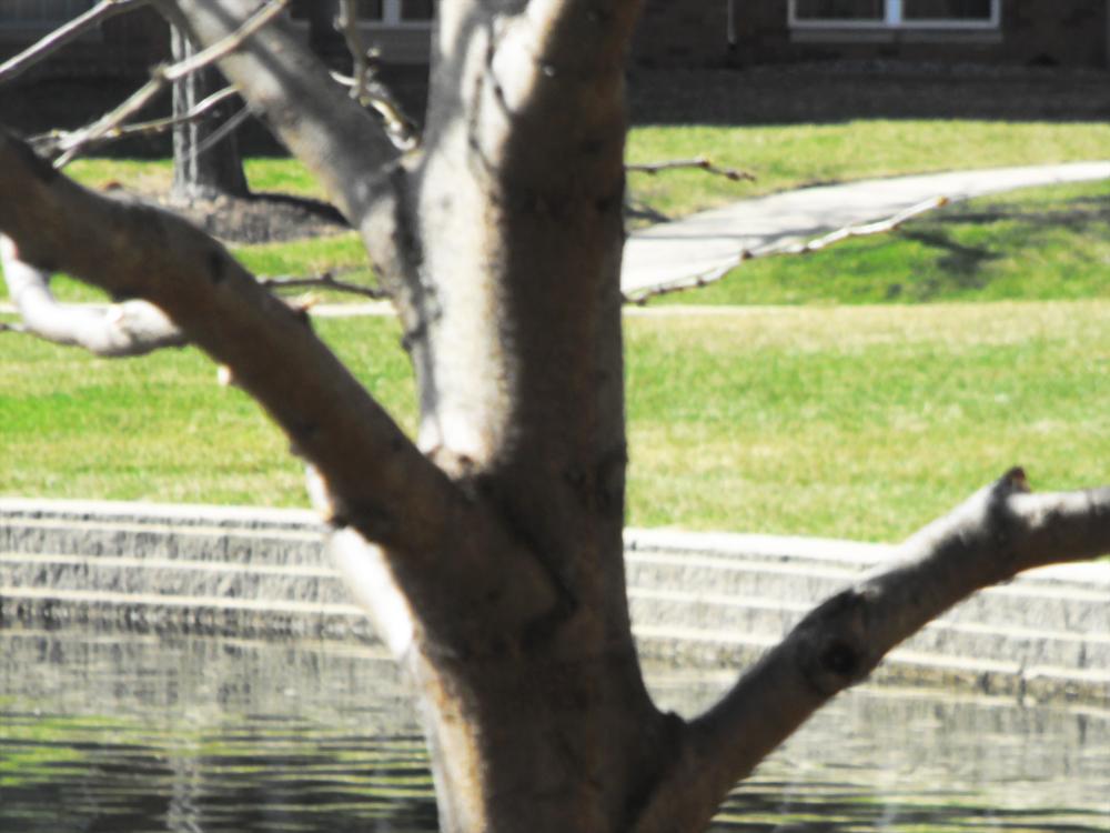 tree outside apartment april 2014